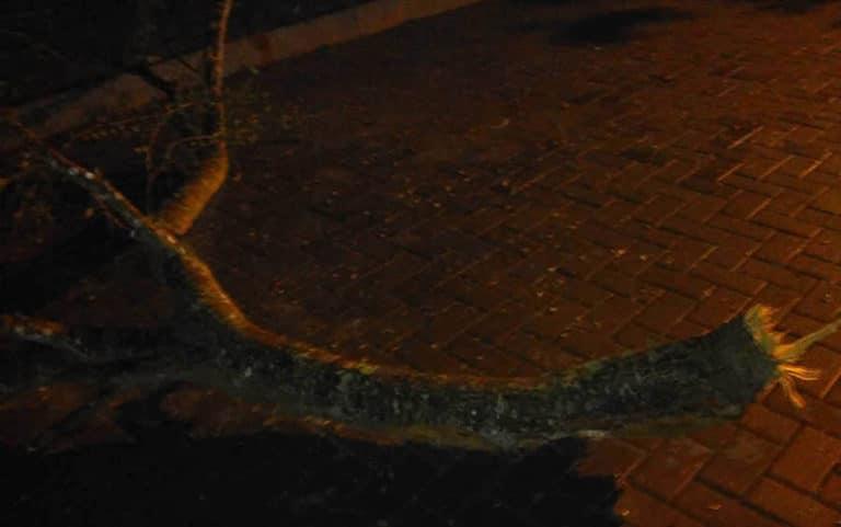 Nih dia batang pohonnya... Apa ga ngeri tertimpa segede itu...